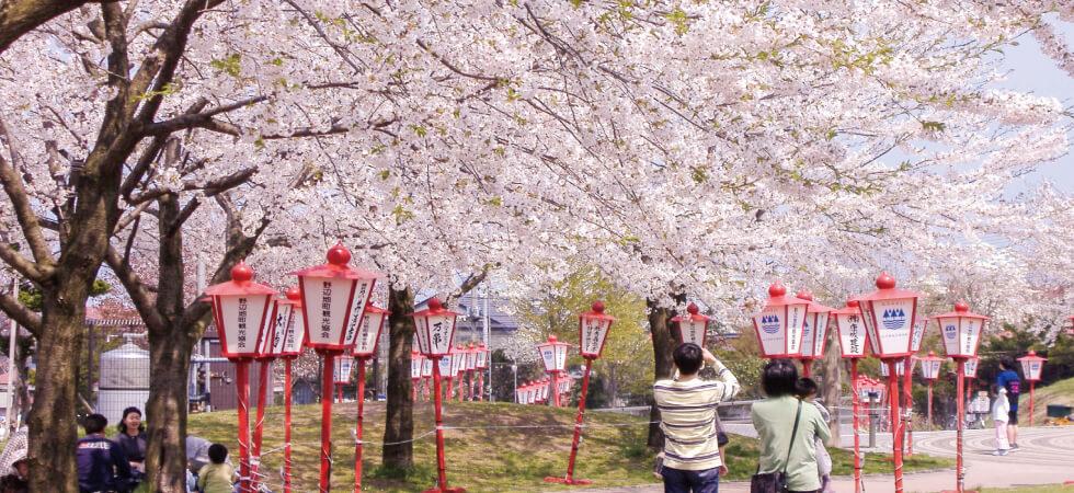 野辺地桜まつり